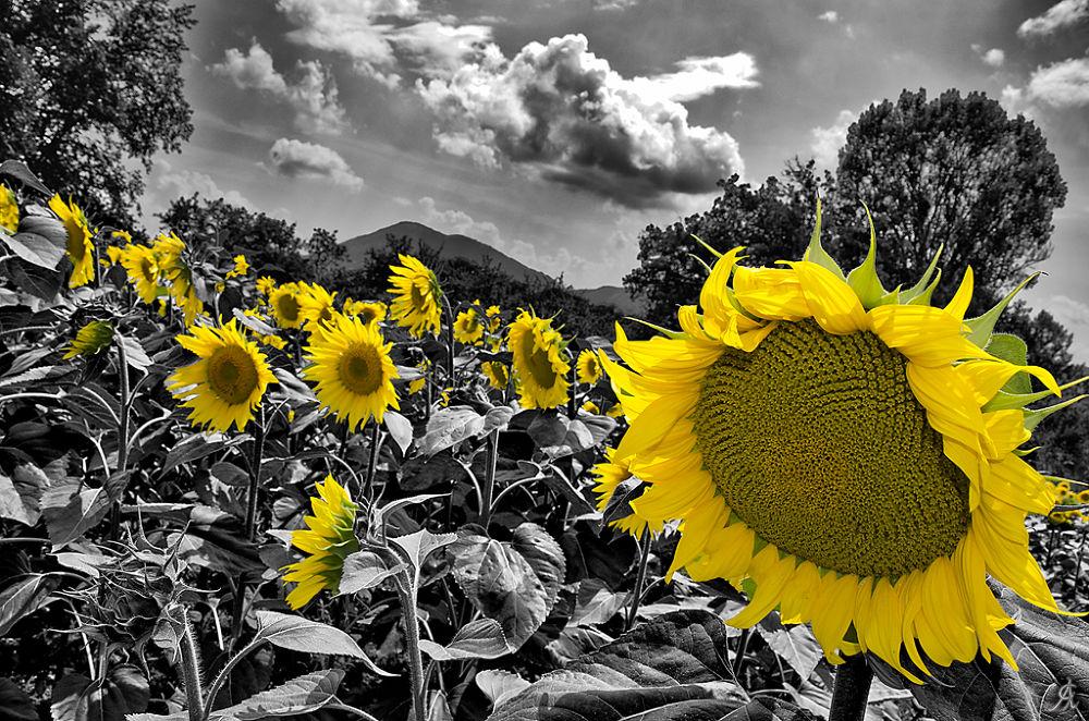 Portrait of flower by Alessandro Giorgi Art Photography