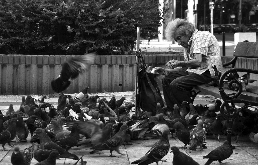 Photo in Journalism #old #woman #poverty #pigeons #food #belgrade #serbia