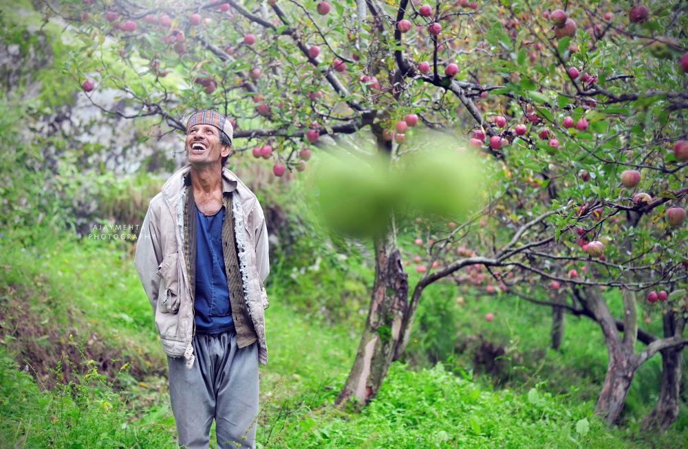 apple  by ajaymehta