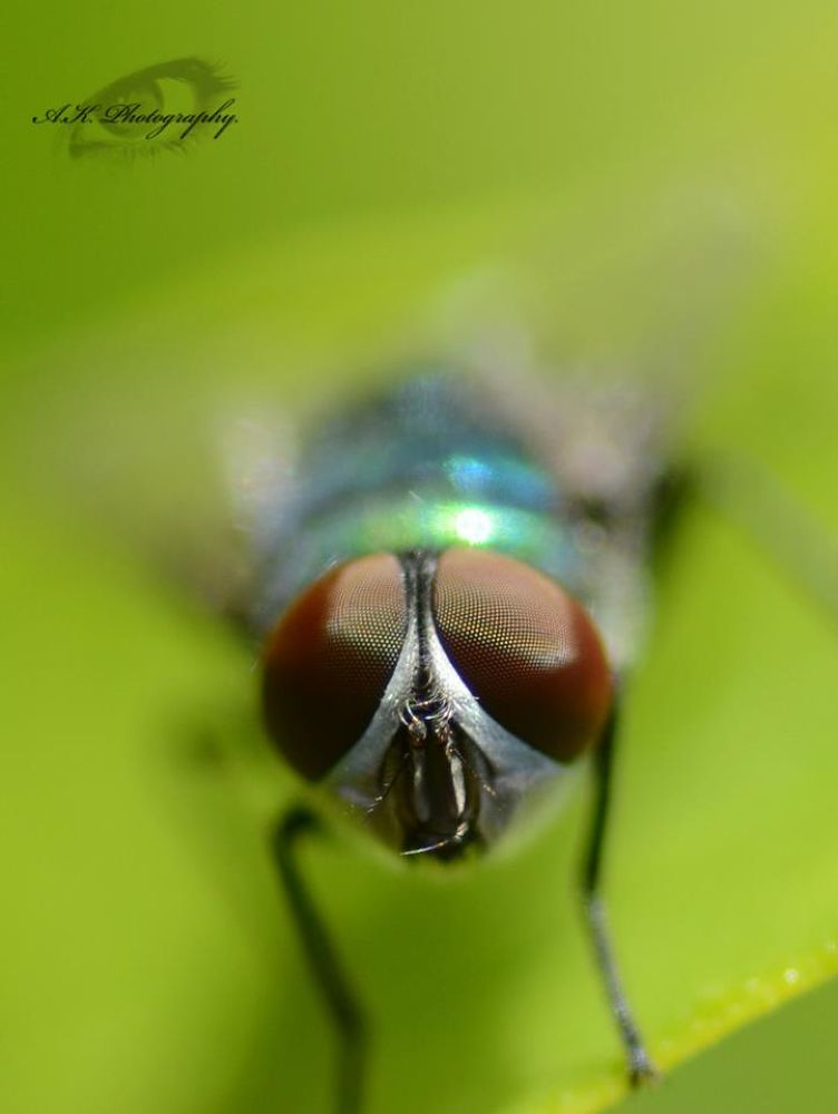 Macro by AKphotopro