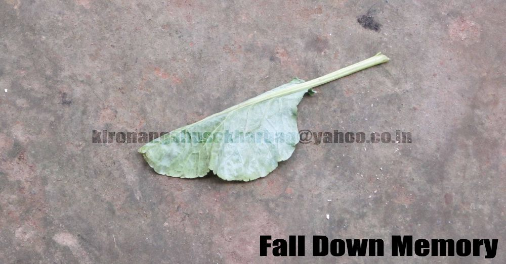 fall down memory by Kironangshu Sekhar Bag