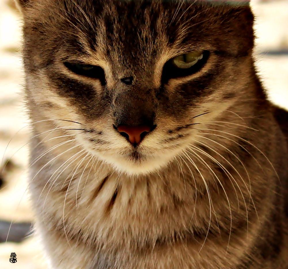 Catty by RidzeKhan