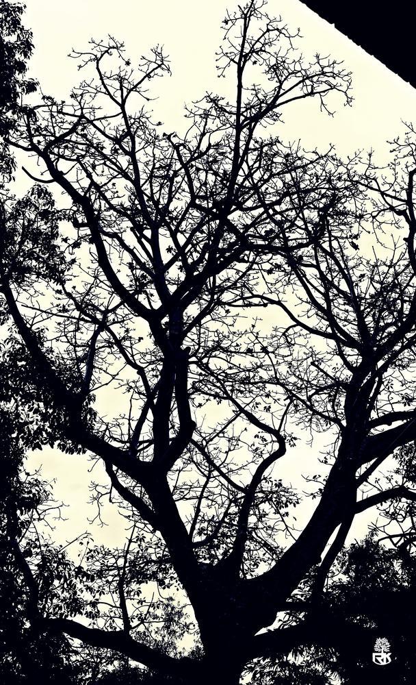 Silence by RidzeKhan