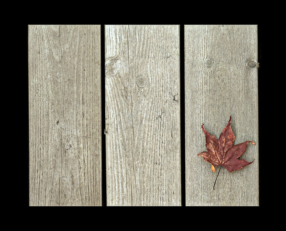 Just a brown dried leaf on my porch by clicksnapshot