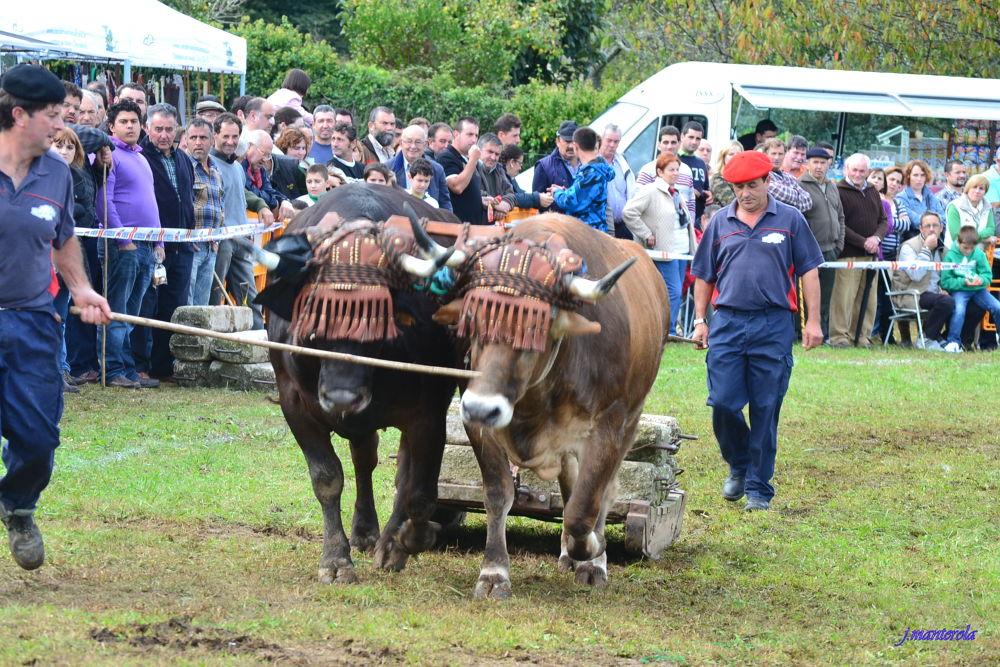 Arrastre de bueyes(Hoznayo,Cantabria) by franciscojaviermanterolasaiz