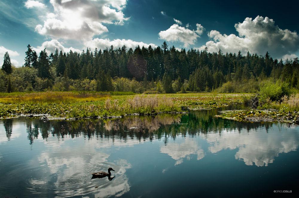 Beaver Lake by OriolColls