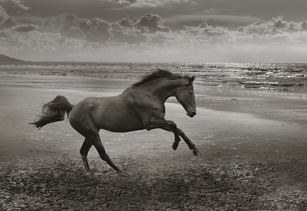 Horse Deauville by jeanmichelberts