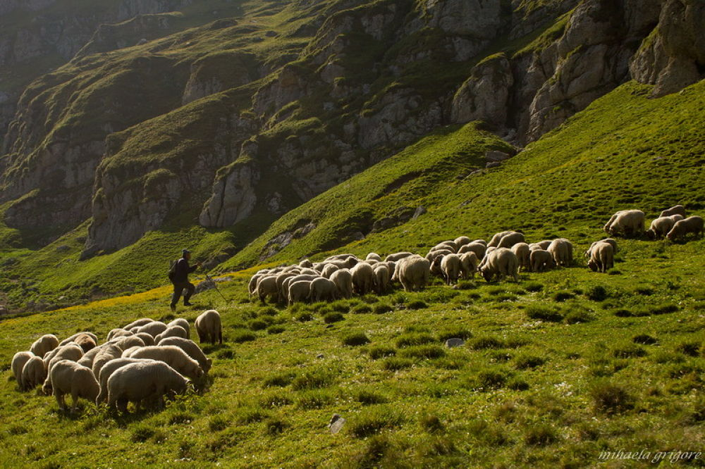 Photo in Nature #sheperd #sheep #sunset #mountain #nature #landscape #ypa2013