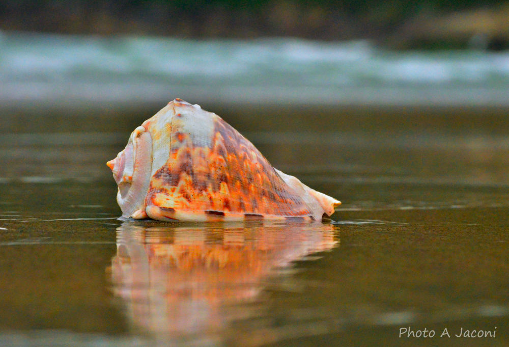 Shell by andrejaconi