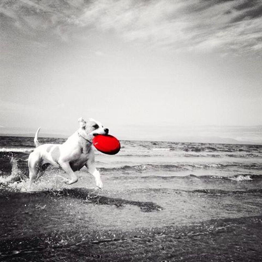 bella  by Coco Grey Photography