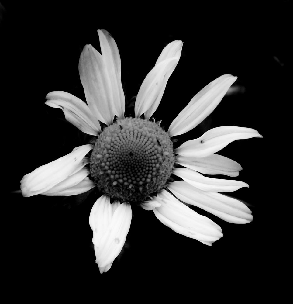 flower by Coco Grey Photography