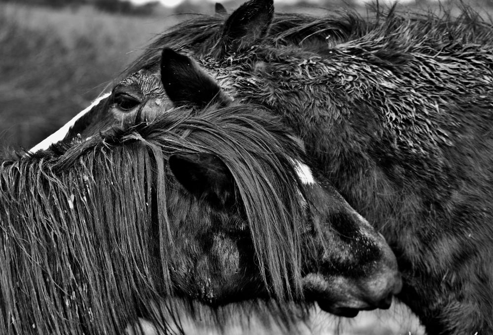 Your love aint foaling anyone!!  by Coco Grey Photography