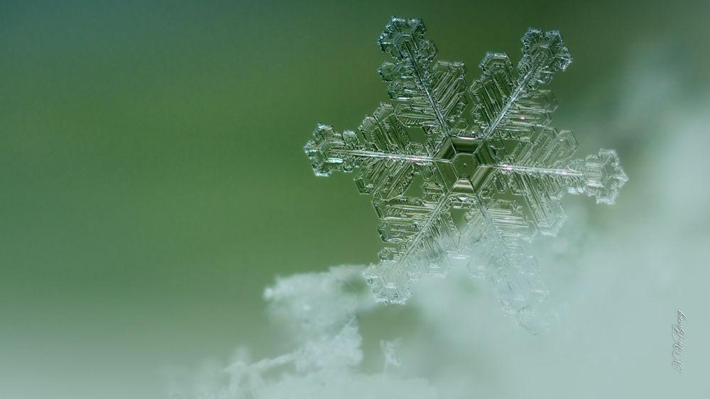 snowflake by Nguyen Vu-Giang
