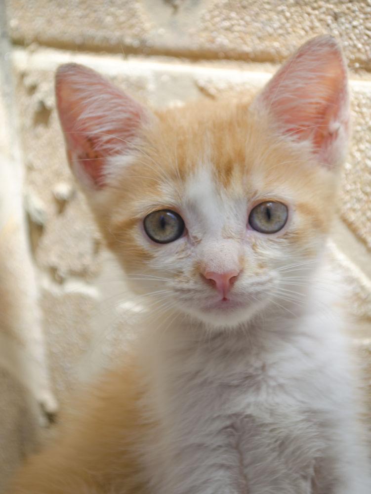 Baby cat by SidneyZaratustra