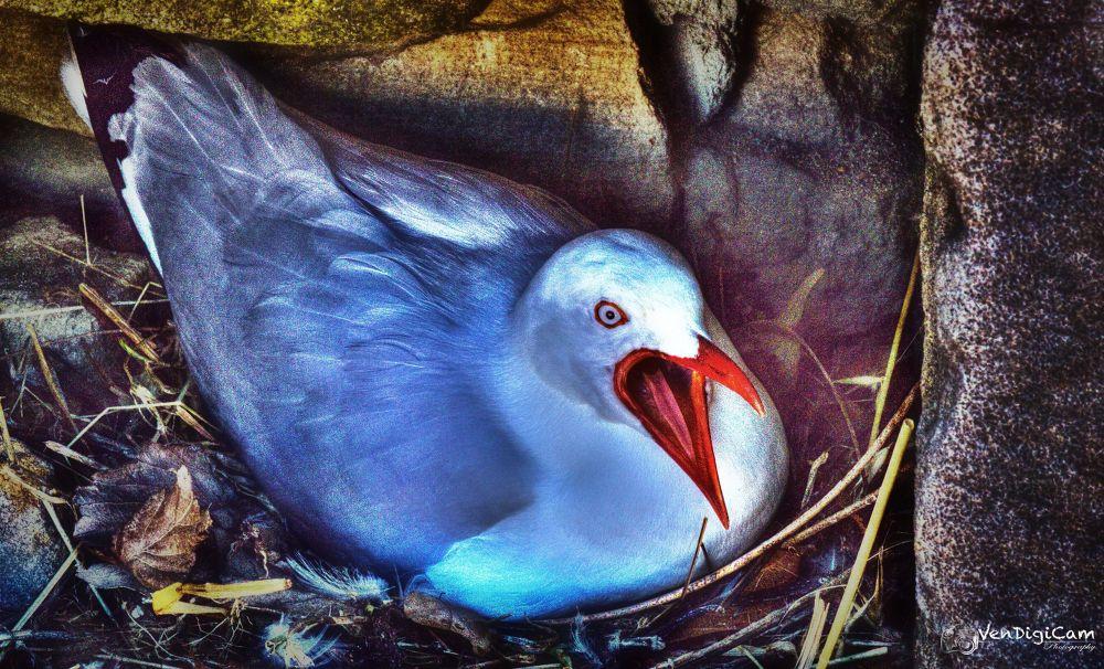 Photo in Animal #gull #bird
