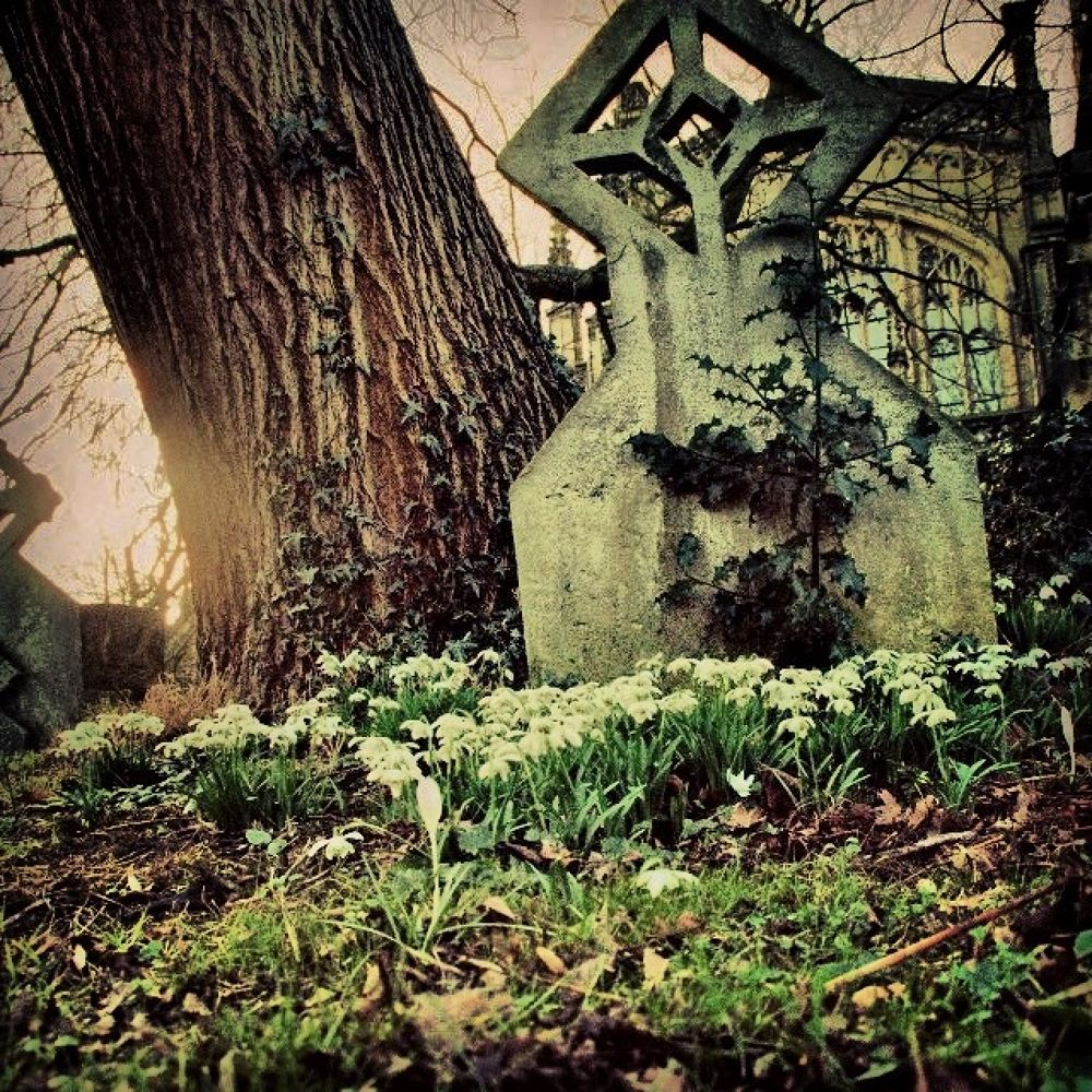 Photo in Landscape #gothic #graves #grave #stone #yard #flowers #sun #spooky