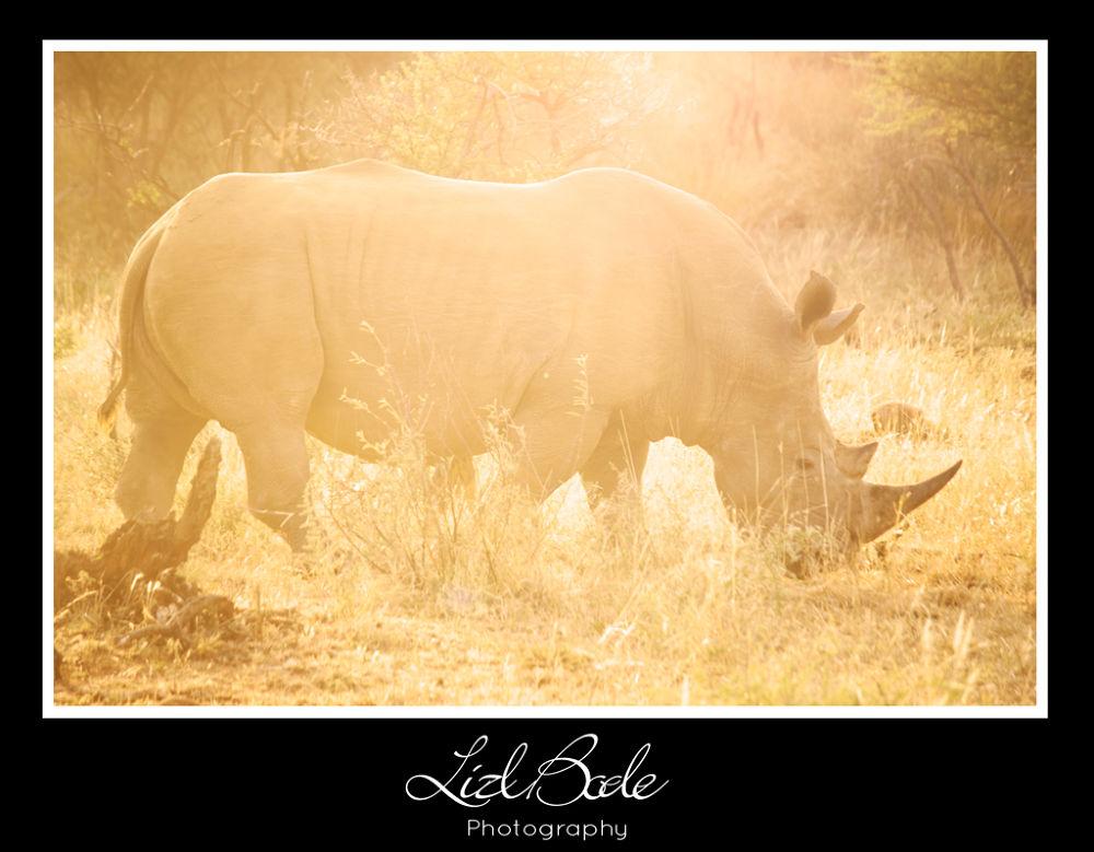 White Rhino sunset by lizlbode