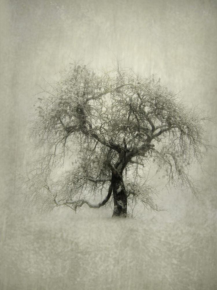 trees by ljubinkalepojevic