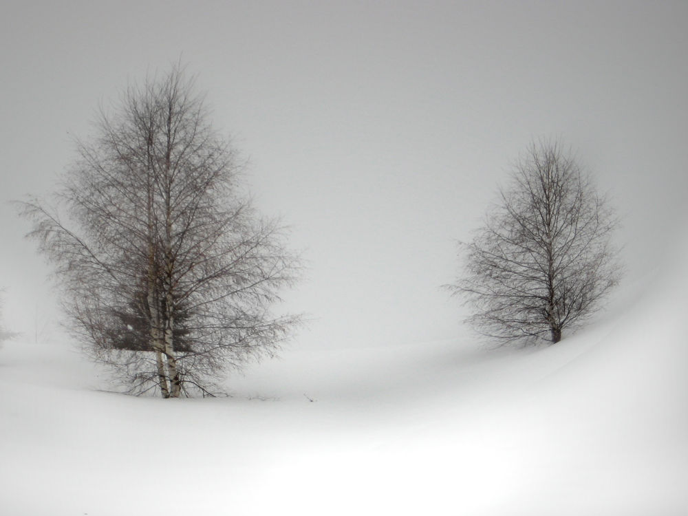 Photo in Landscape #trees #landskape #winter #fog #birch