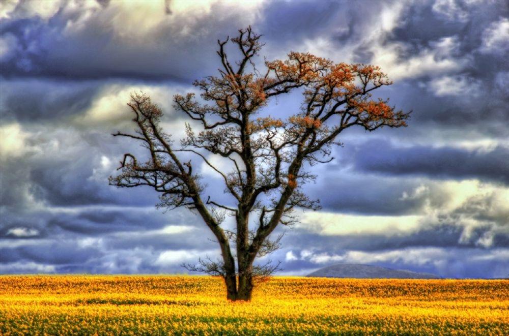 The Tree by photoartbysol