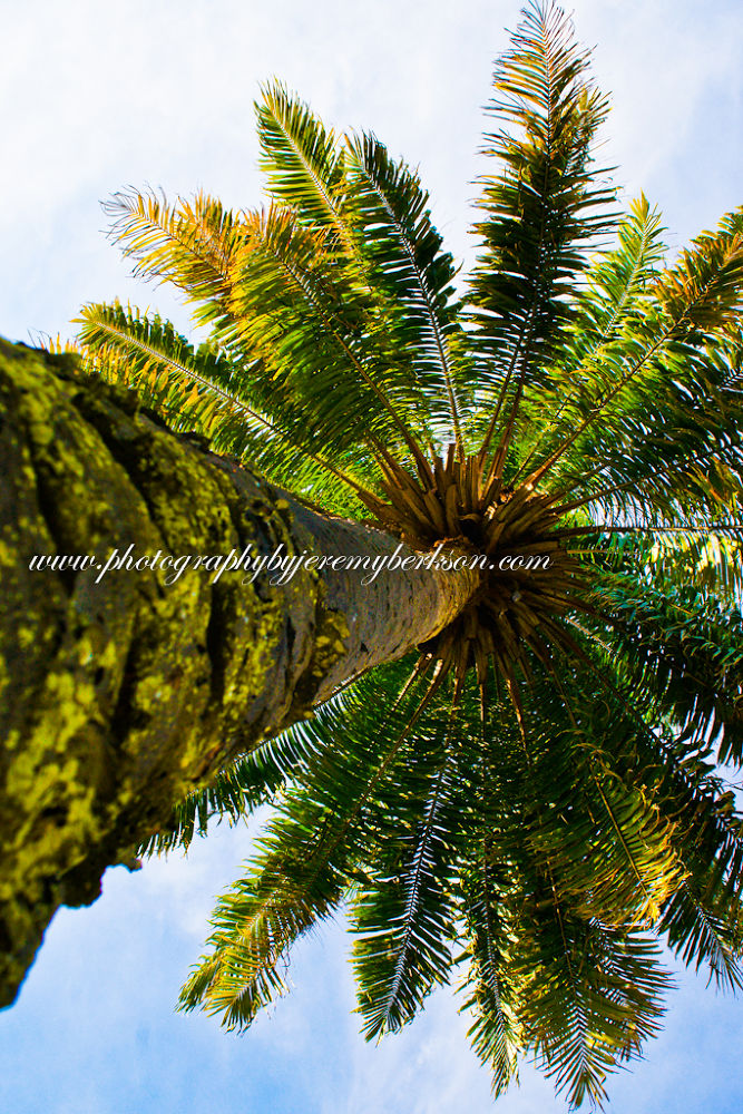 Florida Palm by Jeremy Berkson