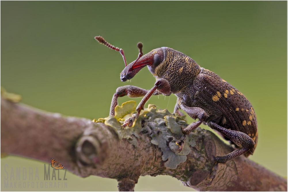 Photo in Macro #bug #beetle #brown #ypa2013