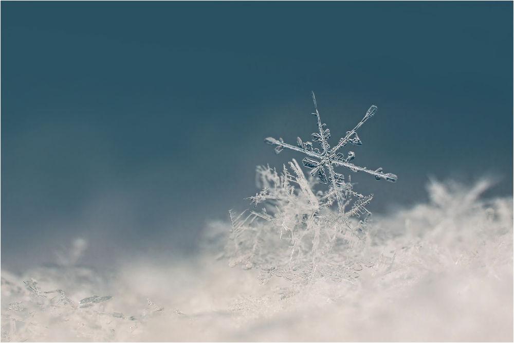 Photo in Macro #ypa2013 #snow #flake #snow flake #ice