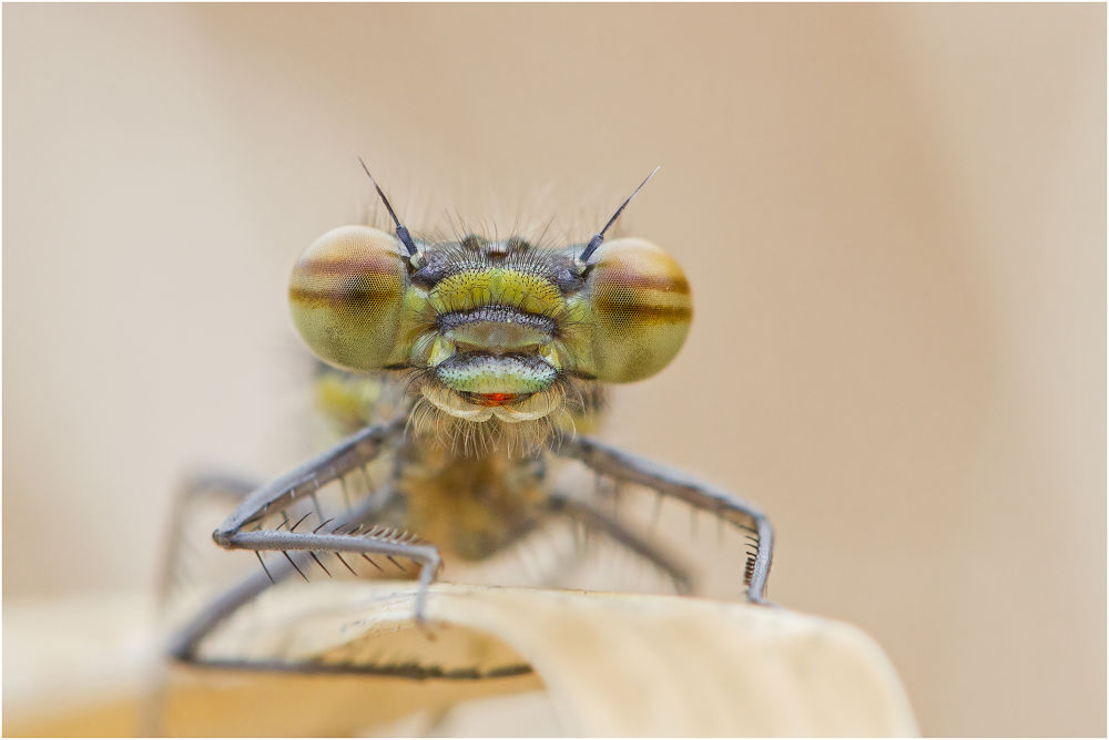 Photo in Macro #ypa2013 #dragonfly