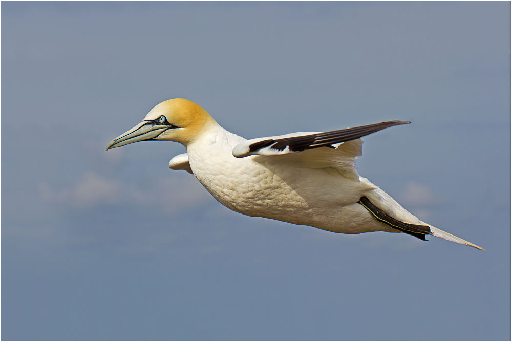 Photo in Animal #ypa2013 #fly #bird