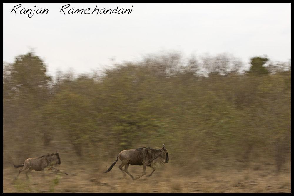 Born to Run by ranjanramchandani9
