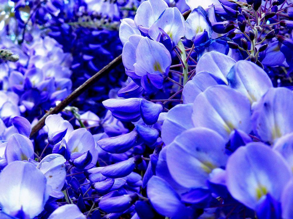blue by amgpfoto