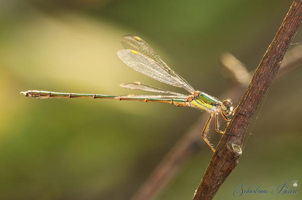 Photo in Animal #insetti #libellula #verde