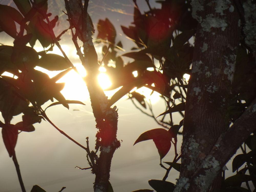 leaves by kitohoswu