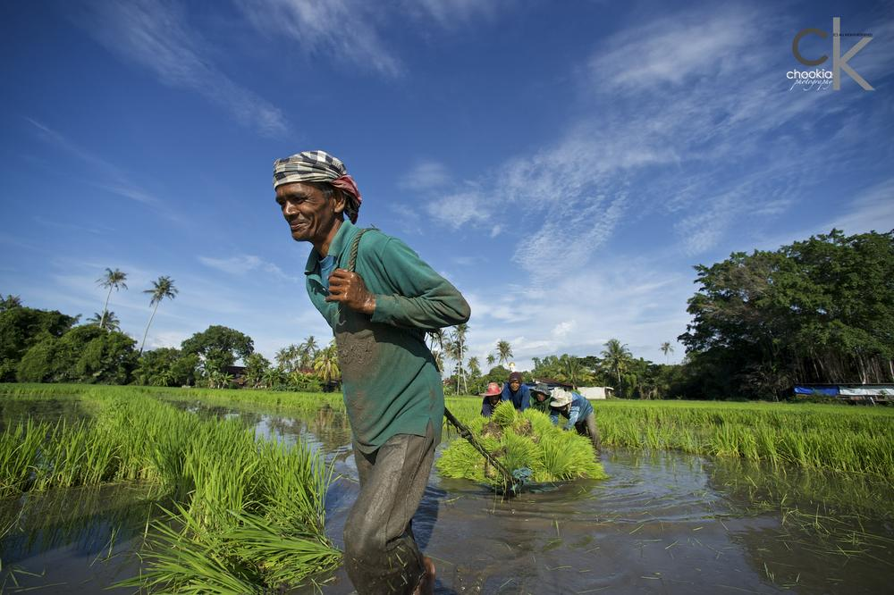 Photo in People #hard working #paddy field #rice field #nikon 14mm f2.8d