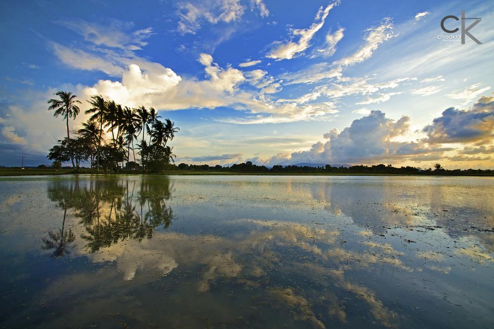Photo in Landscape #paddy field #sunset #reflection #coconut tree #nikon 14mm f2.8d