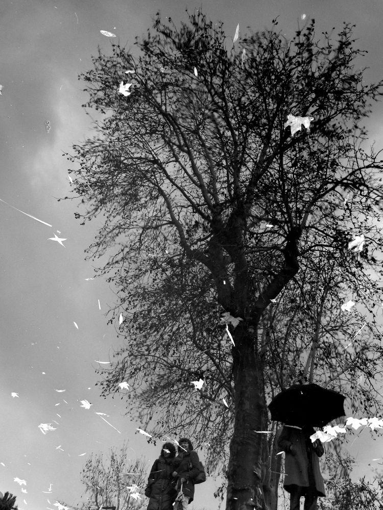 Untitled by JuditBiwan