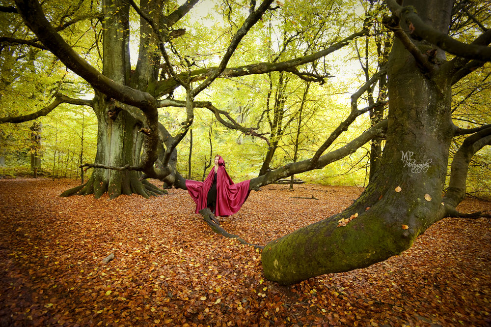 Photo in Portrait #fairytale forest #fairytale #forest #woods #enchanted #brothers grimm #autumn #red cape