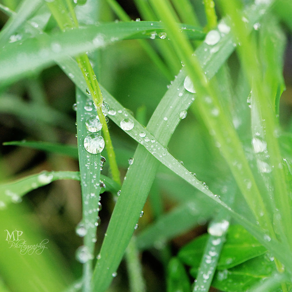 Photo in Nature #drops #spring #green #grass