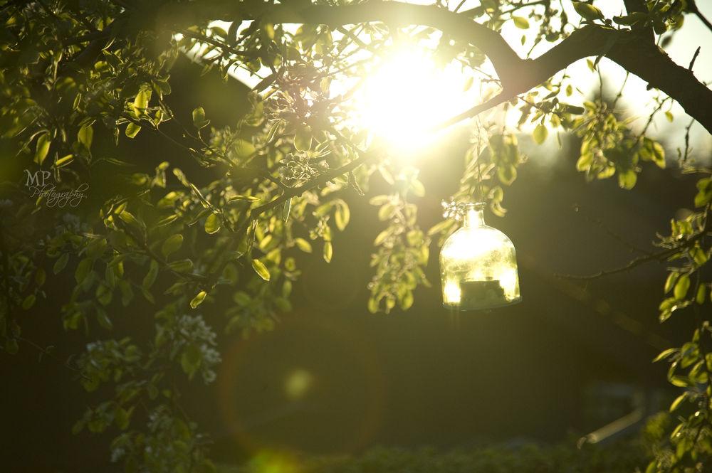 Photo in Nature #light #tree #summer #evening light #leaves #green