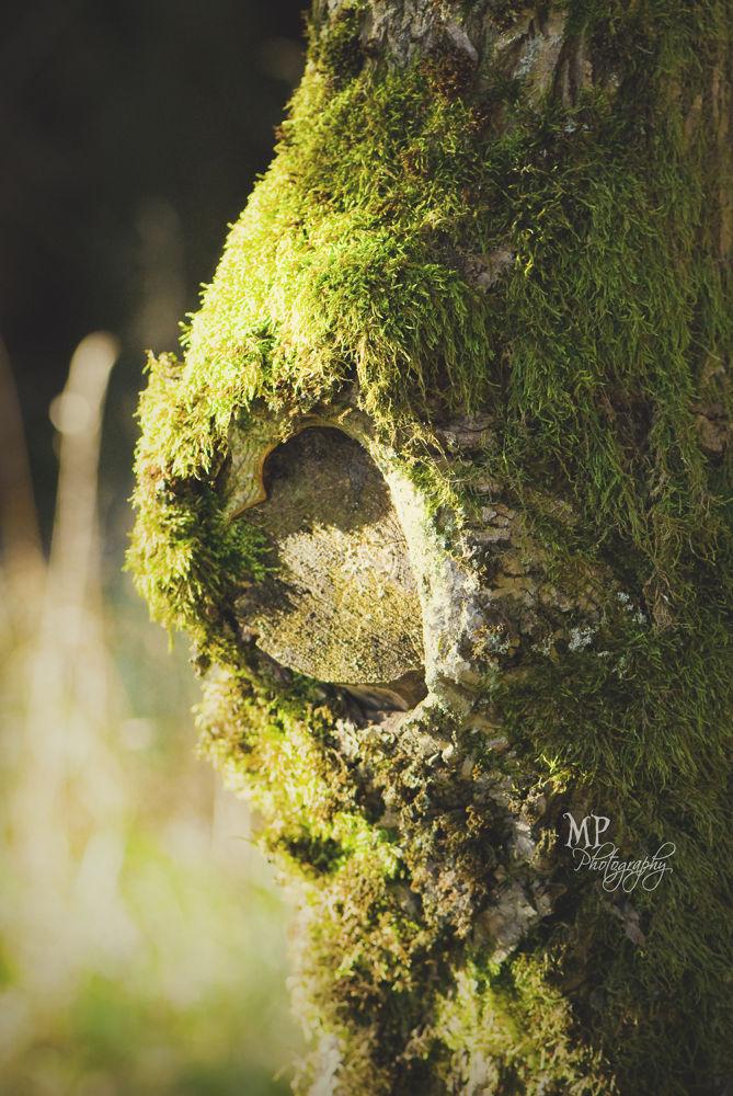 Photo in Random #nature #tree #love #heart #summer #light #sunshine #green
