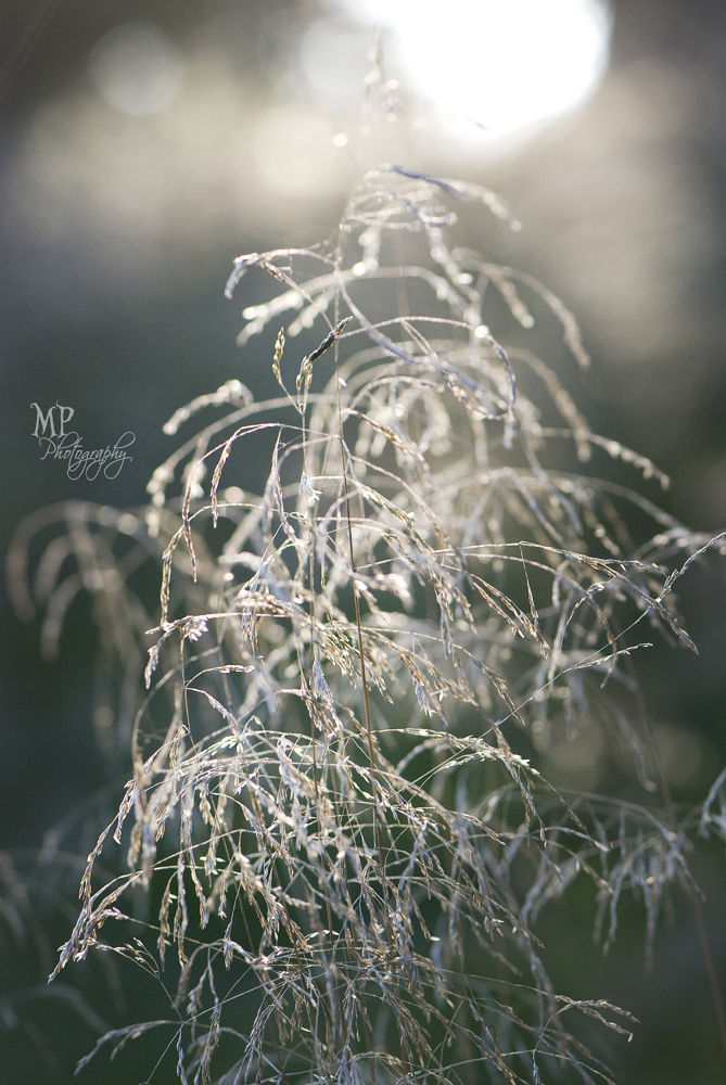 Sway  by MiriamPeuserPhotography