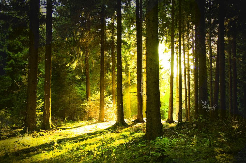 Enchanted Forest -www.facebook.com/MiriamPeuserPhotography  by MiriamPeuserPhotography