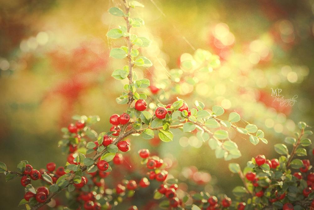 Photo in Random #nature #berries #summer memories #goodbye summer #light