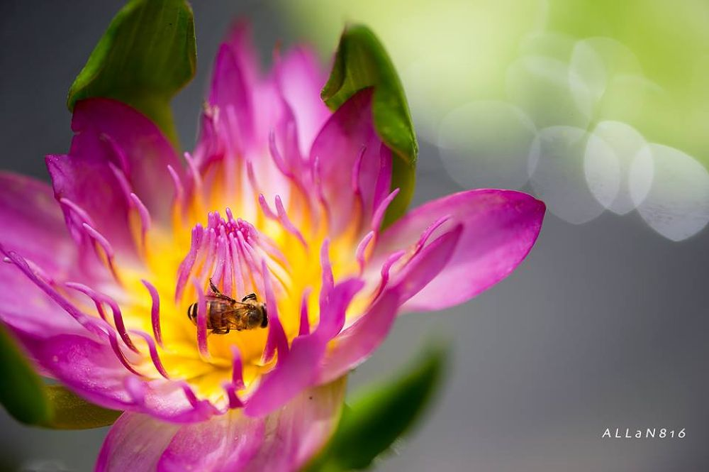 Busy Bee by Allan Ooi