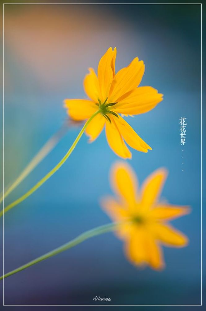 Yellow by Allan Ooi