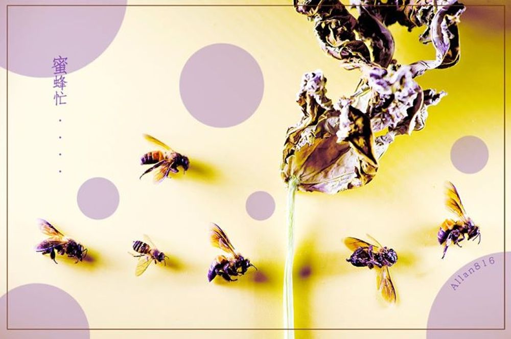 Busy Bees by Allan Ooi