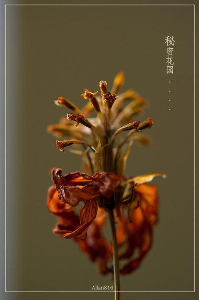 Dried by Allan Ooi