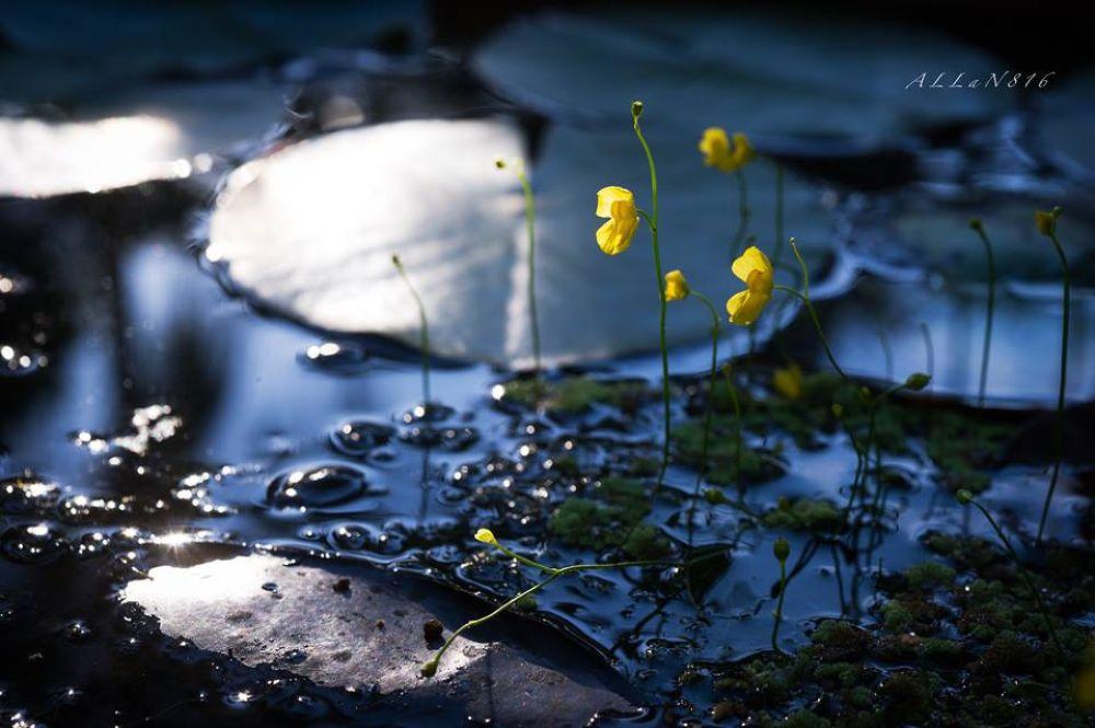 Hello Yellow by Allan Ooi