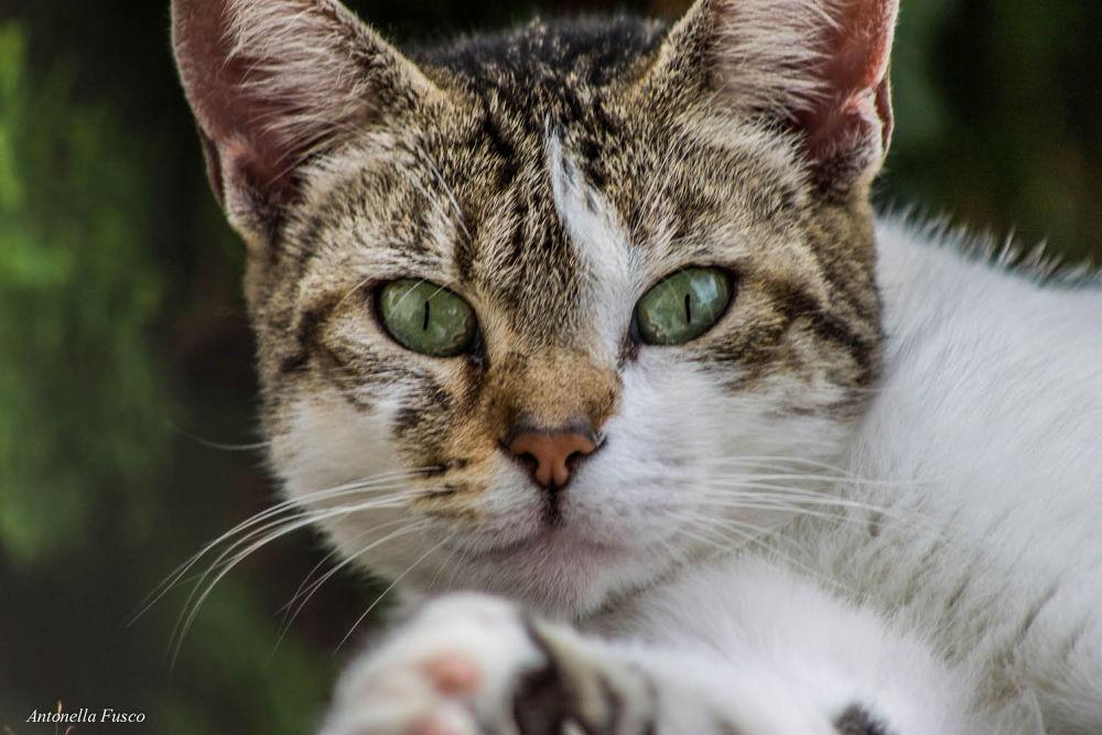 Gatto by antonellafusco35