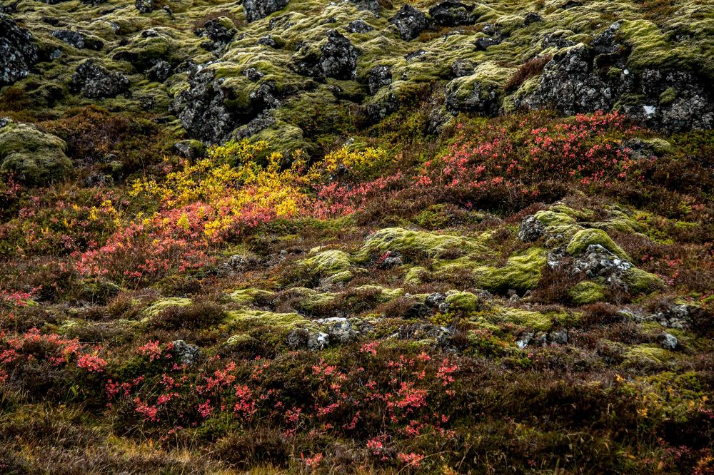 Photo in Random #lava #moss #vegetation #rock #stone #field #grass #autumn #iceland.
